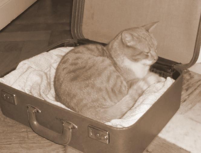 Malle panier à chat