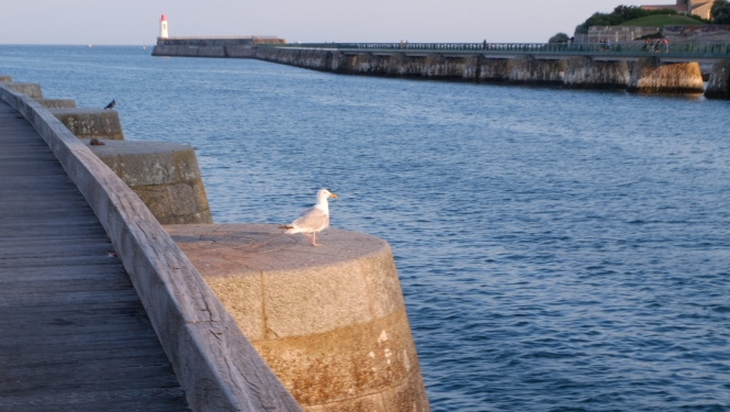 Mouette port